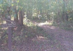 American-Chestnut-Land-Trust-North-Trail-Experience_03_YourCalvert