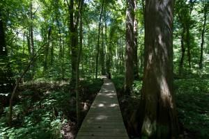 Battle-Creek-Cypress-Swamp-An-Easy-Family-Outing-On-A-Hot-Summer-Day_02_YourCalvert
