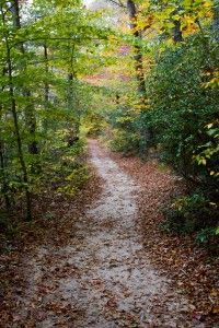 Calvert Cliffs State Park Hiking Trail