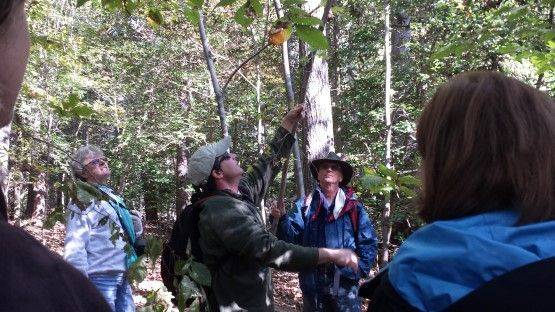 Exercise Both Brain And Body On An American Chestnut Land Trust Guided Hike