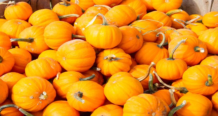 Calvert County Pumpkin Patches: Family Traditions & Fun At The Farm