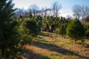 Scriveners-Choose-And-Cut-Christmas-Trees-Farm_03_YourCalvert