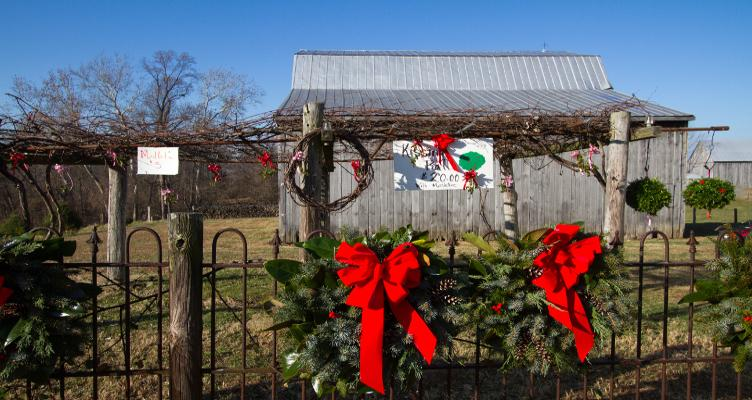 Keeping Tradition Alive At Scrivener's Choose And Cut Christmas Trees Farm