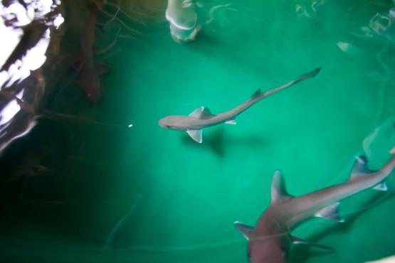 Sharkfest Calvert Marine Museum Sharks In Water